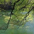 写真: 新緑の十二湖
