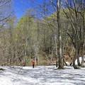 写真: 芽吹いた原生林