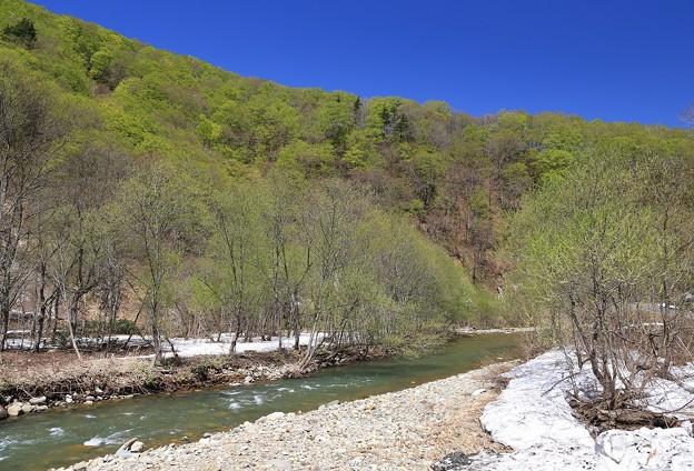 写真: 暗門川新緑の候