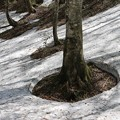 写真: 雪解けの森