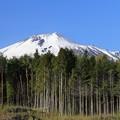 写真: 春の南部富士