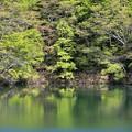 写真: 春めく新緑の水辺