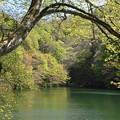 写真: 原生林の湖の静けさ