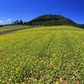 写真: 広大な菜の花畑