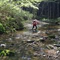 写真: 滝への道
