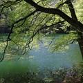 写真: 原生林の中の湖
