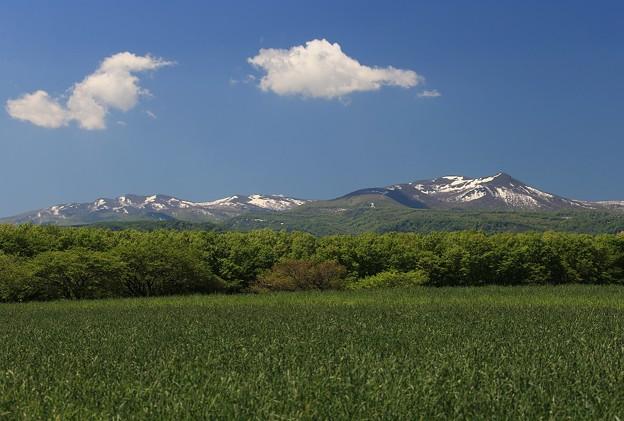 写真: そよ風吹く高原