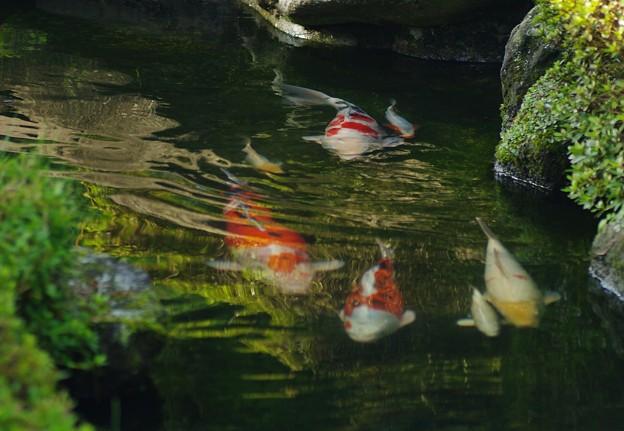 写真: 夏を泳ぐ