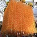 写真: 折鶴に願いを込めて