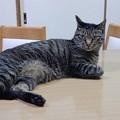 写真: 我輩は猫である