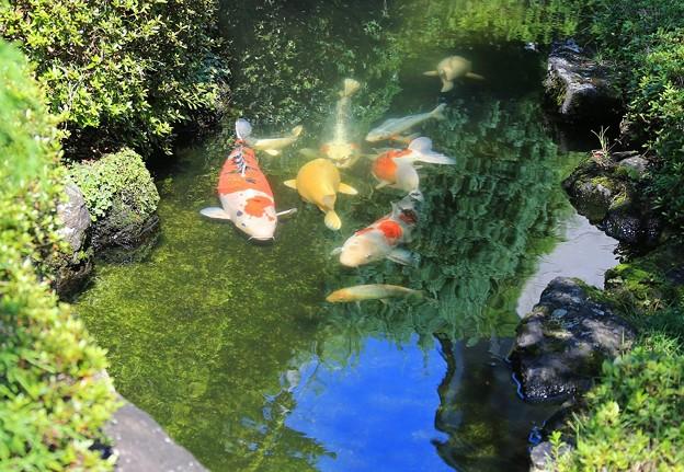 写真: 陽射し注ぐ池