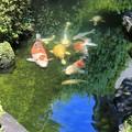 陽射し注ぐ池