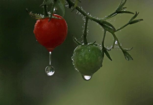 写真: 雨雫(1)