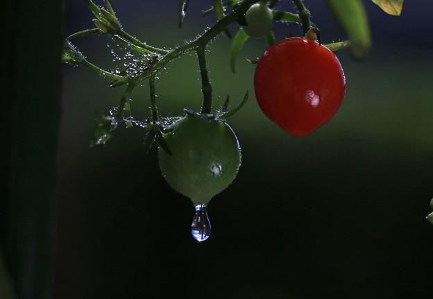 写真: 雨雫(2)