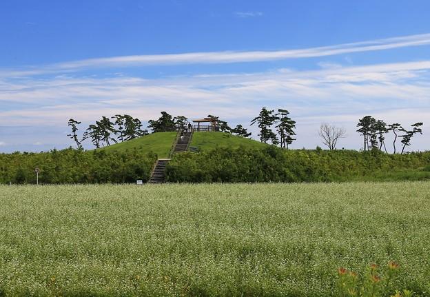 写真: 避難の丘(2)