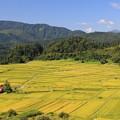 写真: 山里の広大な棚田