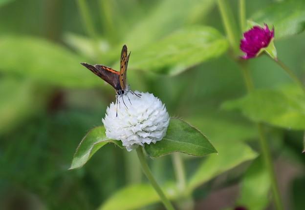 写真: 蝶の楽園