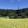 写真: 稲穂と壮麗な三重塔