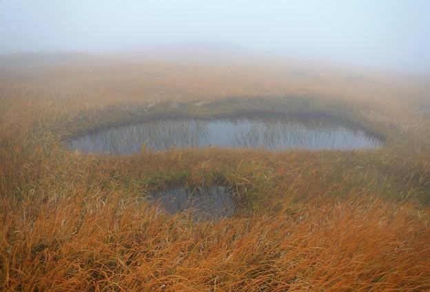 写真: 濃霧の弥陀ヶ原