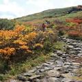 秋深まる登山道