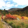 写真: 秋の彩り求めて