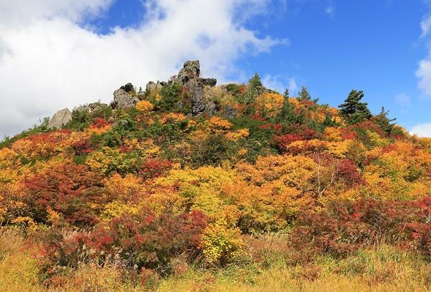 Photos: 美妙な紅葉