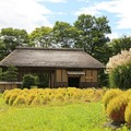 Photos: ふるさと村の秋模様