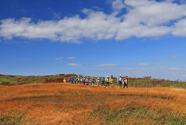 写真: 草紅葉の湿原を行く