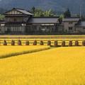 写真: 米 処