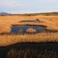 写真: 湿原の輝き