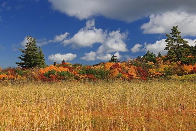 Photos: 鮮麗な秋の風光
