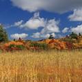 写真: 鮮麗な秋の風光