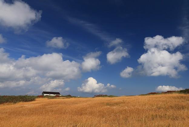 雲が流れ草揺れる秋