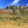 写真: 岩肌の彩り