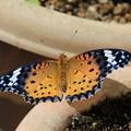 Photos: 蝶のひなたぽっこ