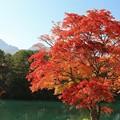 Photos: モミジ美しい裏磐梯
