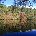 写真: 彩り映す柳沼