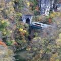 写真: 紅葉列車峡谷を行く