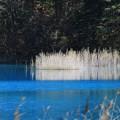 写真: 幽寂の瑠璃沼