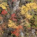 写真: 絶壁の彩り