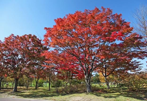 写真: 彩りの散歩道