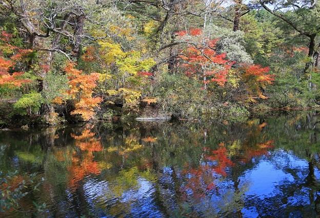 写真: 五色沼の彩り