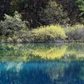 写真: 青沼の神秘さ