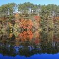 写真: 水辺映して