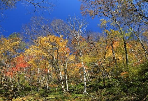 秋深まる山林の彩り
