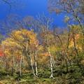 写真: 秋深まる山林の彩り