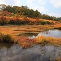 写真: 湿原の秋景色