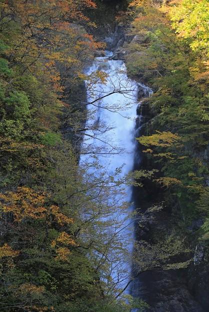 Photos: 谷間に轟く秋保大滝
