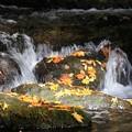 写真: 渓谷の流れ