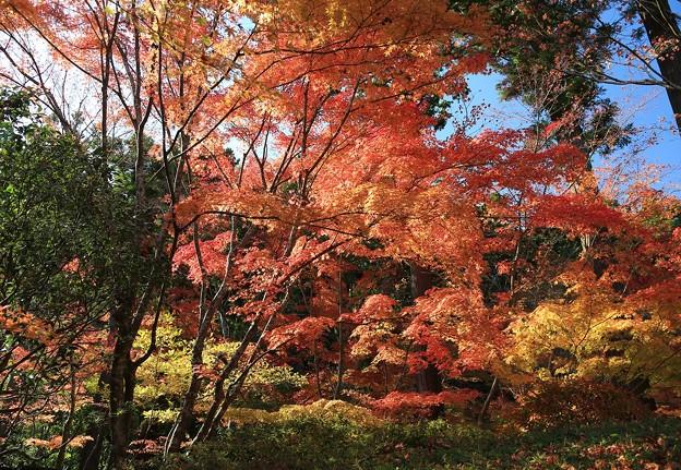 写真: 晩秋の彩り空間